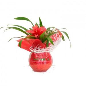 Bromelia con gelatina(Floristerias Monica)