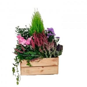 Caja de plantas de exterior(Floristerias Monica)