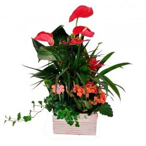 Composición plantas (Floristerias Monica)