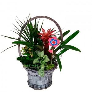 Cesta  plantas (Floristerias Monica)