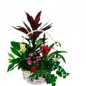 Arreglo de plantas (Floristerias Monica)