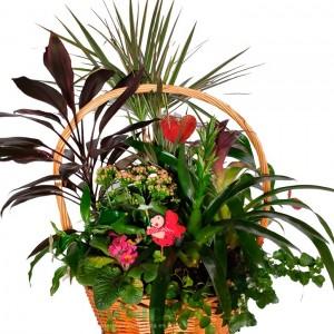 Cesta Extra Grande de plantas(Floristerias Monica)