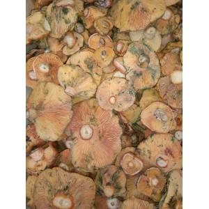 ULTIMAS EXISTENCIAS!!!! Níscalo de Soria (Lactarius deliciosus) 5kg. Setas frescas.