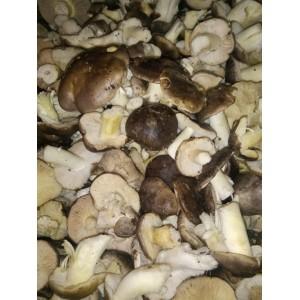 Capuchina soriana (Tricholoma portentosum) formato ahorro 3kg. Setas frescas.
