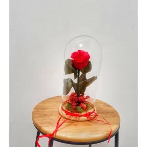 rosa preservada roja en cúpula