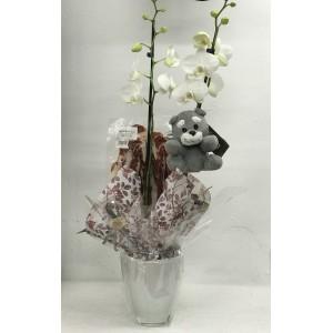 Orquídea para maternidad