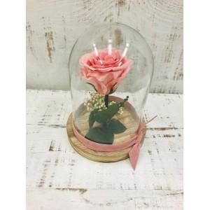 Cúpula mini de rosa preservada